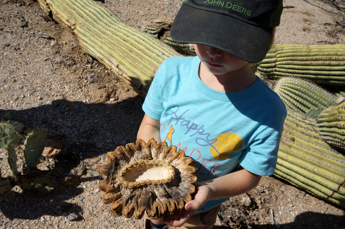 Exploring Saguaro National Park In One Day No Back Home - 10 things to see and do in tucson
