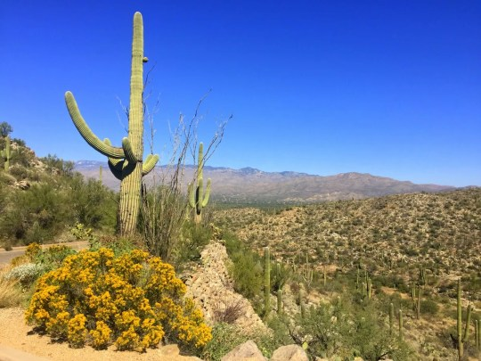 Visiting Saguaro National Park in One Day
