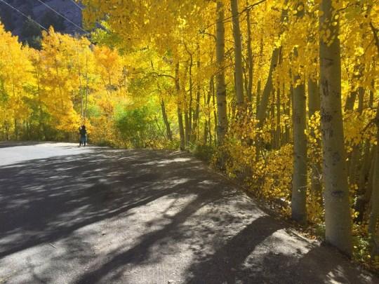 Finding Fall in Bishop, California