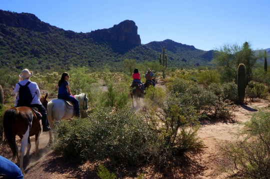 Horseback Riding in Tucson