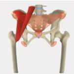 ストレッチセミナー『骨盤と股関節の動かし方について』
