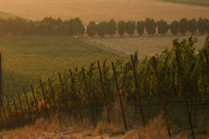 Wente Vineyards - Auction Package at 2012 Noble Chef Benefit to Support Maui Culinary Academy