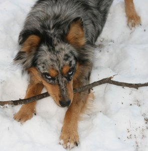 kaseys-gotta-stick