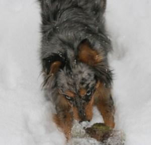 kasey-kills-the-wabbit-agai