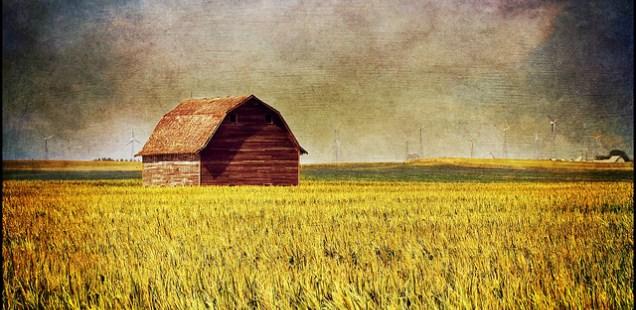 Martin Barker's 500 words   GMO foods, the common sense debate…