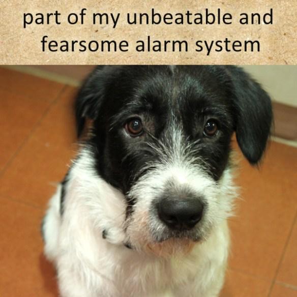 unbeatable alarm system