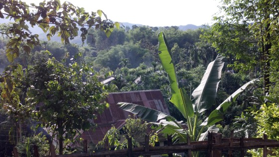 The view from my room in the jungle hideaway.