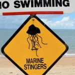 Marine Stingers sign by Zhu/Flickr (CC BY-NC 2.0)