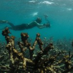 Photo: Dead Coral off Lizard Island. The Ocean Agency / XL Catlin Seaview Survey / Richard Vevers.