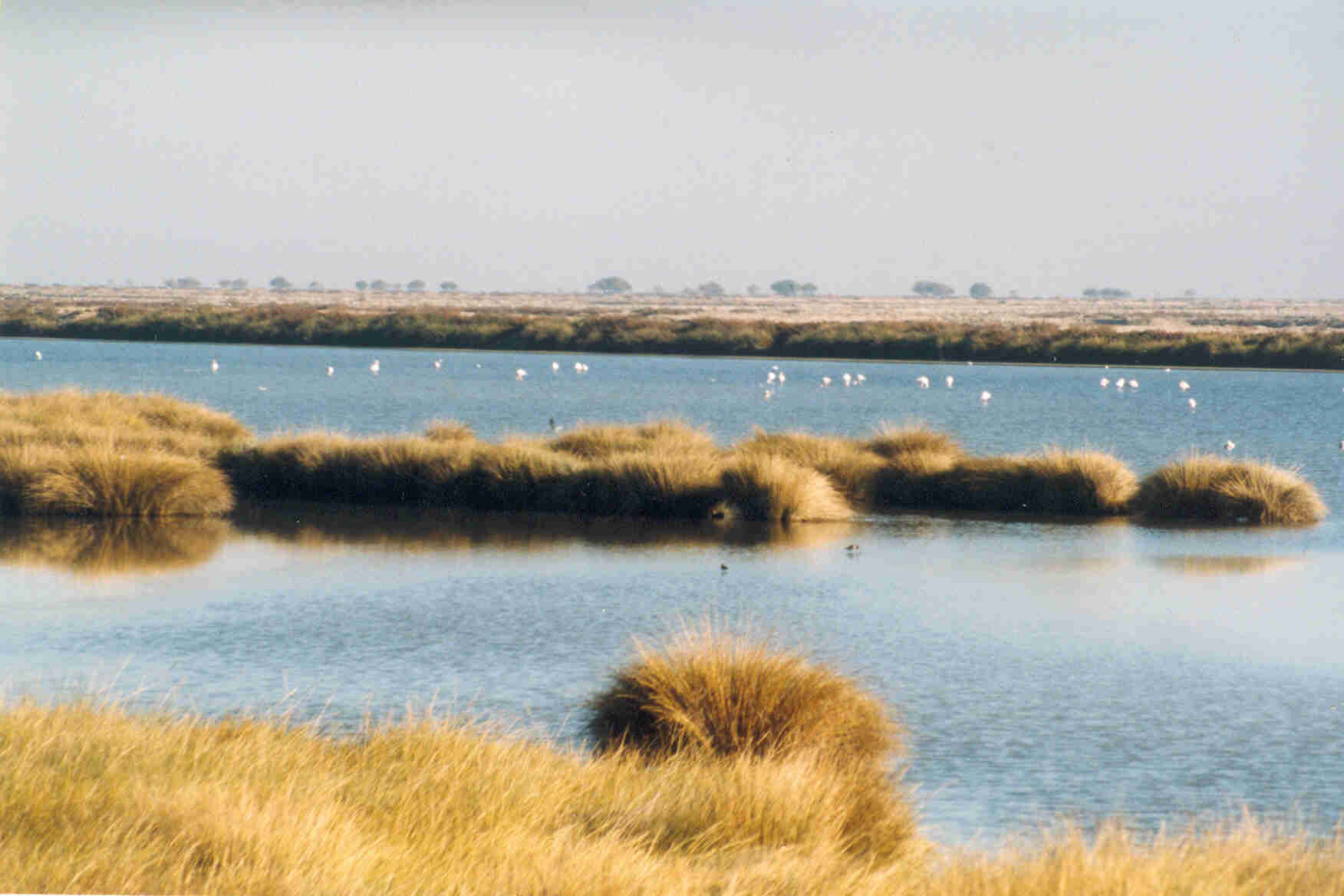 Wetlands_in_Donana