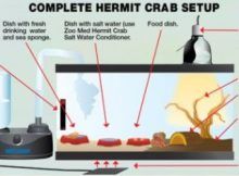 how-to-care-for-hermit-crabs-324x235