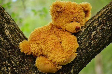 teddy-bear-792191_640
