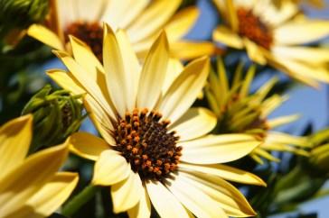 flower-108685_1280