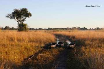 botswana oklavango monticone (17)