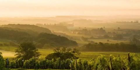 Alba sulle vigne del Palatinato. ©  Rheinland-Pfalz Tourismus GmbH