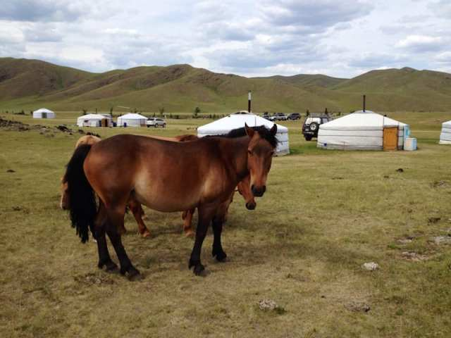 Gher - Mongolia