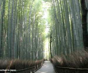 Arashiyama-bambooforest