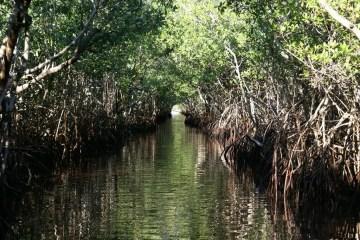 Everglades_Florida_Eric Salard