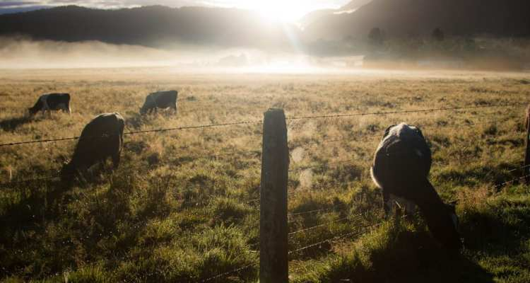 Nuova Zelanda_Westland_Juan Salmoral