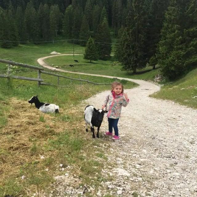 In malga in Trentino