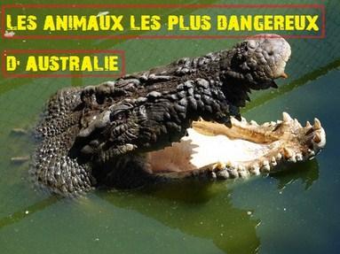 featured animaux dangereux (Copier)