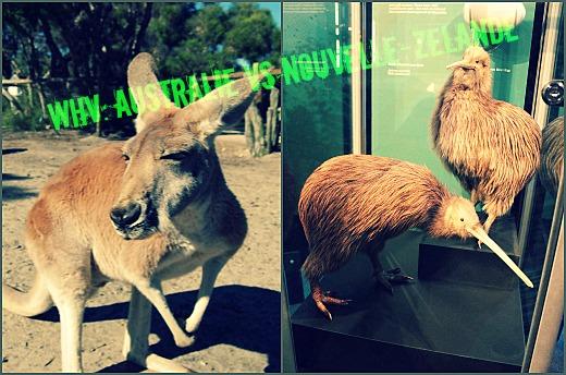 australie vs nz