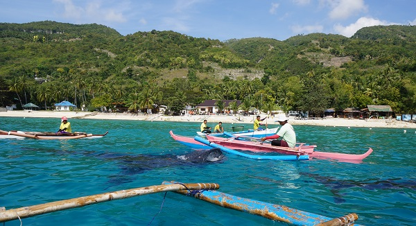 Requins baleines oslob Philippines