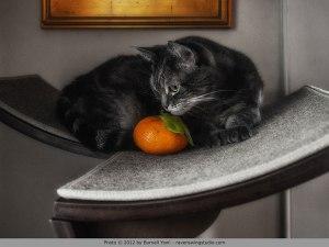 Nora With Tangerine