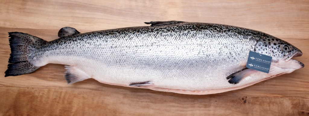 Verlasso-Whole-Salmon-Wide-Photo