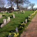 Copps Hill Burying Ground Daffodils - March 2012 by Thomas F. Schiavoni - 2