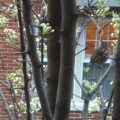 Signs of Spring in Tree on Fleet St - March 2012 by Deb DeCristoforo