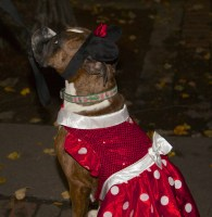 Halloween in Doggie Red