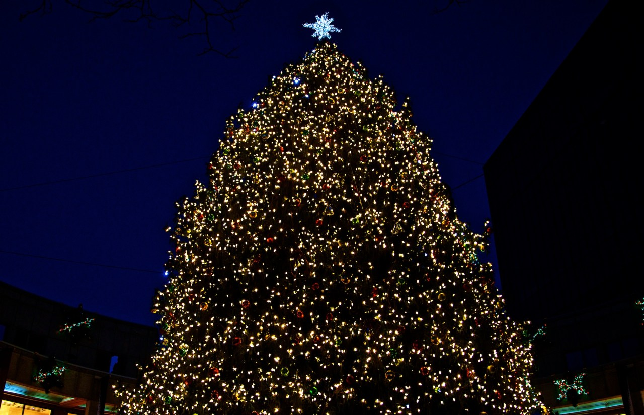2012-11 | Faneuil Hall Tree and Blink 18