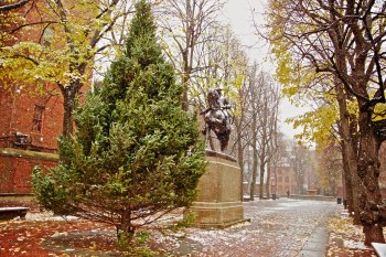 First Snow on the Prado - December 2012 - Photo by Matt Conti