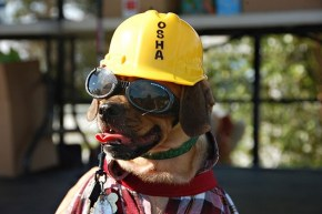 awesomeconstruction-dog