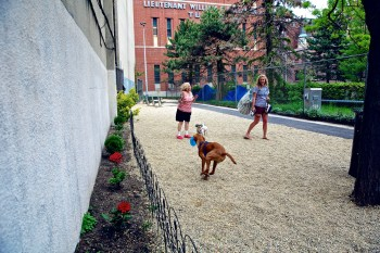 Dogs and their owners run around in the newly renovated dog park on Richmond Street.