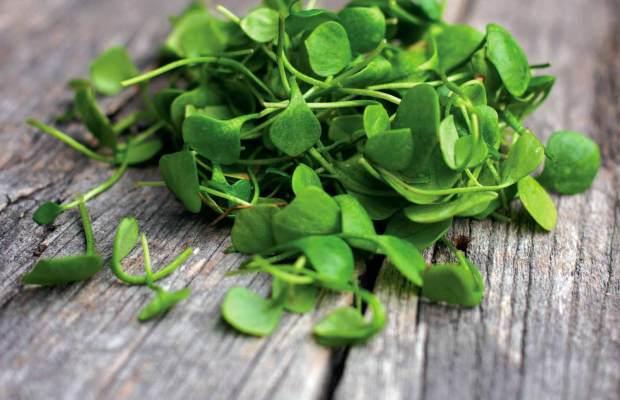 salad-days-of-watercress