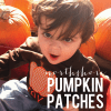 pumpkin-patch-graphic