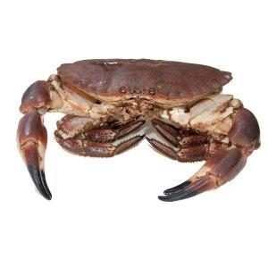 Brown-Crab-rs