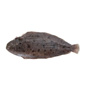 Dover-Sole-rs