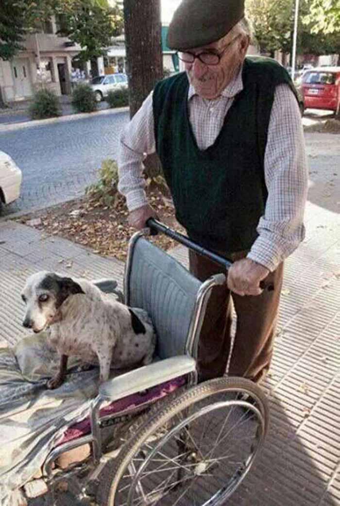 perros-parte-de-la-familia-12
