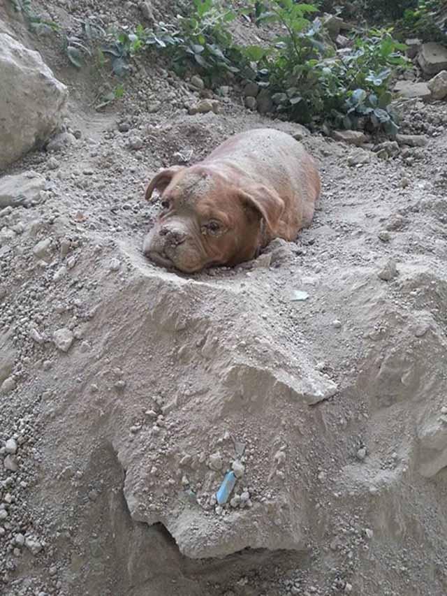 perra enterrada viva