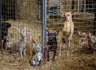 Docenas de animales rescatados de la casa de una supuesta rescatista