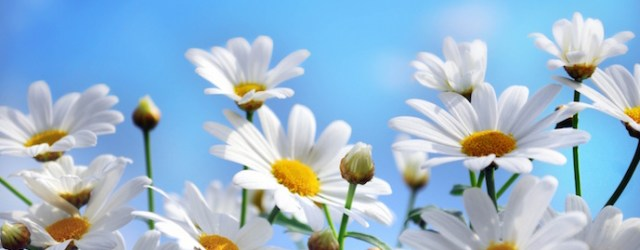 summer-flowers-images-3
