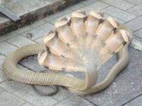 Mulher teria expelido uma cobra de 7 cabeças e outros bichos após passar por exorcísmo com Pastor