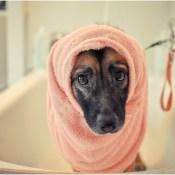 mestizo baño