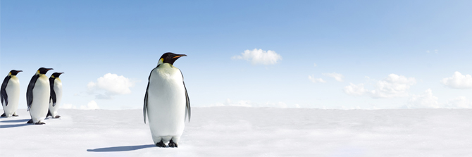 NJP Blog image_emperor penguins