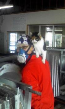 背中に乗ったネコ