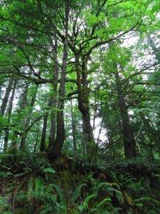 San Juan Islands Trees