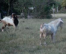 Commercialization of Limlair Farm in Carriacou